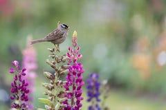 Kleiner Vogel gehockt auf Schnelldrachen Stockbild