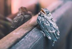 Kleiner Vogel im Fenster stockfotografie