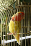 Kleiner Vogel im Rahmen Stockbilder
