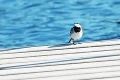 Kleiner Vogel sitzt auf einem Pier Lizenzfreies Stockfoto