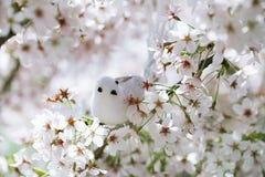 Kleiner Vogel und Vogelhaus im Frühjahr mit Blütenkirschblume s Stockfotografie