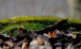 Kleiner Wald Stockfoto