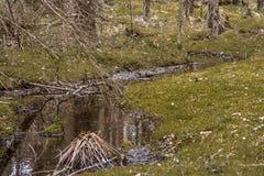 Kleiner Waldbach, der das Moos durchfließt Stockfoto