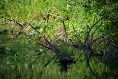 Kleiner Waldfluß Lizenzfreies Stockfoto