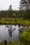 Kleiner Waldsee Lizenzfreie Stockbilder