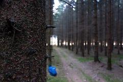 Kleiner Waldweg mit linkem Rucksack lizenzfreies stockfoto