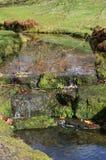 Kleiner Wasserfall in der englischen Landschaft Lizenzfreie Stockfotos
