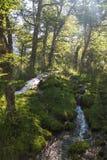 Kleiner Wasserfall, der in Patagonia Argentinien läuft Stockfotos