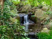 Kleiner Wasserfall in einem japanischen Wald stockfotografie