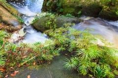 Kleiner Wasserfall im Dschungel Stockbild