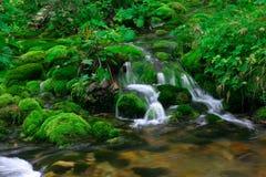Kleiner Wasserfall im Holz Stockfotografie