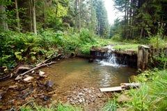 Kleiner Wasserfall im polnischen Holz Lizenzfreie Stockfotos