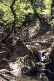 Kleiner Wasserfall im Wald Lizenzfreies Stockbild
