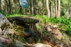Kleiner Wasserfall im Wald lizenzfreie stockfotos