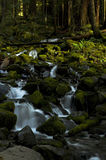 Kleiner Wasserfall im Wald, Staat Washington Lizenzfreies Stockbild