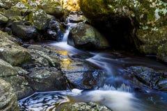 Kleiner Wasserfall in Nationalpark Springbrook Stockbild
