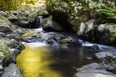 Kleiner Wasserfall in Nationalpark Springbrook Stockfotos