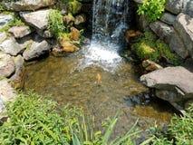 Kleiner Wasserfall und Felsen und große Fische Stockbilder