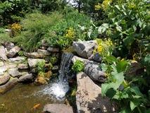 Kleiner Wasserfall und Felsen und große Fische Stockbild