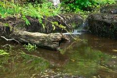 Kleiner Wasserfall und Klotz Stockbild