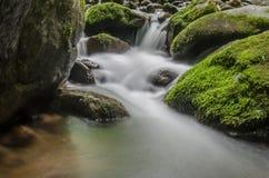Kleiner Wasserfall und Moos Stockbilder