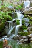 Kleiner Wasserfall und Vogel Stockbilder