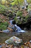 Kleiner Wasserfall-und Wasser-Nebenfluss mit Fall-Ahornblättern Stockfotografie