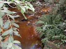 Kleiner Wasserlauf Lizenzfreies Stockfoto