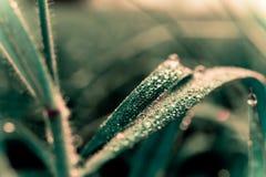 Kleiner Wassertropfen auf Reis Stockfotografie