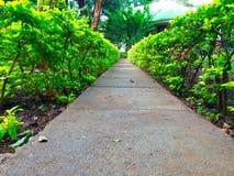 Kleiner Weg Stockfoto
