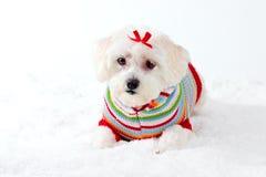 Kleiner weißer Hund in der Winter-Szene Lizenzfreies Stockbild