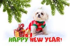 Kleiner weißer Hund Grüße des neuen Jahres stockfoto