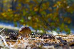Kleiner weißer Pilz wächst lizenzfreie stockfotos