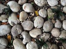 Kleiner weißer Stein mit Baum Stockfoto