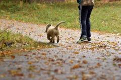 Kleiner weißer Welpe und Junge, die zusammen in Natur geht Stockbild