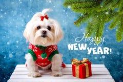 Kleiner wei?er Hund Gr??e des neuen Jahres lizenzfreie stockfotografie