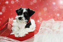 Kleiner Welpe in einem Weihnachtsgeschenk Stockfotografie
