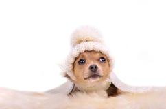 Kleiner Welpe mit dem Hut, der auf weißem flaumigem Pelz liegt stockfoto