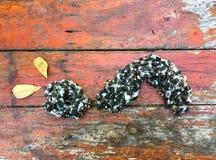 Kleiner Wurm gemacht von den Baumwollsamen mit hölzernem Hintergrund lizenzfreies stockfoto