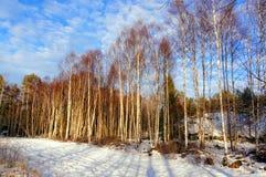 Kleines Ackerland bedeckt mit Schnee Lizenzfreies Stockbild