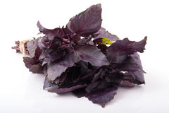 Kleines Bündel purpurrote Basilikumblätter Lizenzfreies Stockbild