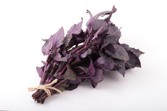 Kleines Bündel purpurrote Basilikumblätter Lizenzfreies Stockfoto