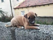 Kleines Baby des Dorfs Hunde stockbild
