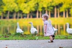 Kleines Baby am Flussufer, das wilde Gänse jagt Stockfotos