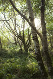 Kleines Baumkabel-UNO-Tageslicht Stockfotos