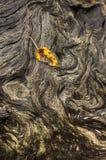 Kleines Blatt auf gerilltem Klotz Stockfotos