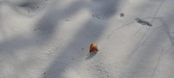 Kleines Blatt Browns auf Winterschnee stockbild
