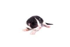 Kleines blindes Kätzchen auf einem weißen Hintergrund Stockfoto