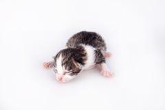 Kleines blindes Kätzchen auf einem weißen Hintergrund Lizenzfreies Stockfoto