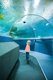 Kleines blondes behaartes Mädchen am Aquarium Stockfoto